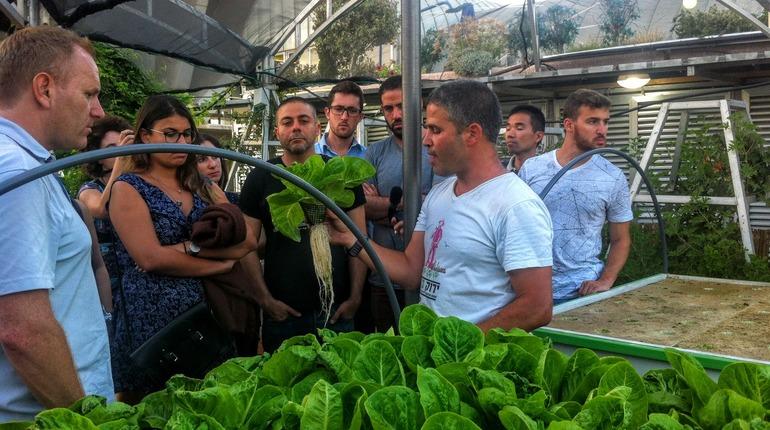 גידול ירקות אורבני