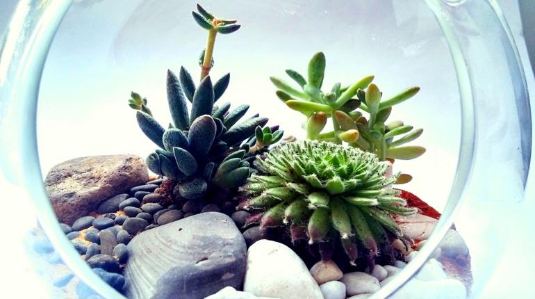 סדנת יצירה עם סוקולנטים: הצמחים הלוהטים בעיצוב הבית