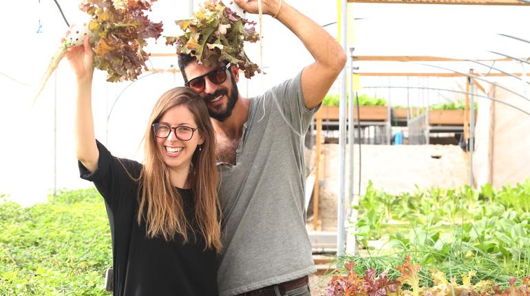 סדנת גידול ירקות בבית ללא אדמה! על גג דיזנגוף סנטר