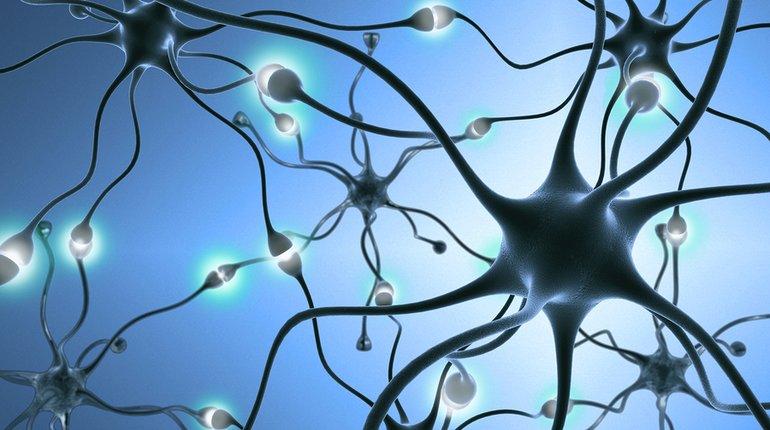 הדס סלוין: לנפץ את מיתוס המוח