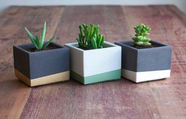 איך מכינים עציץ בטון? כך תעשו זאת נכון